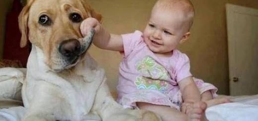 molestando perro
